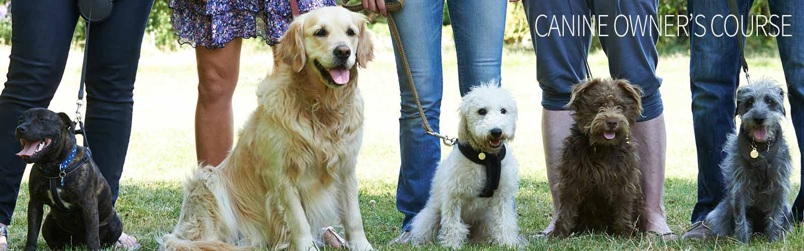 Holistic course for canine owner's