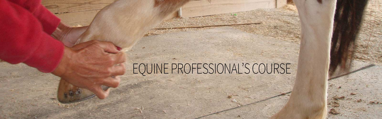 Holistic training for equine professionals