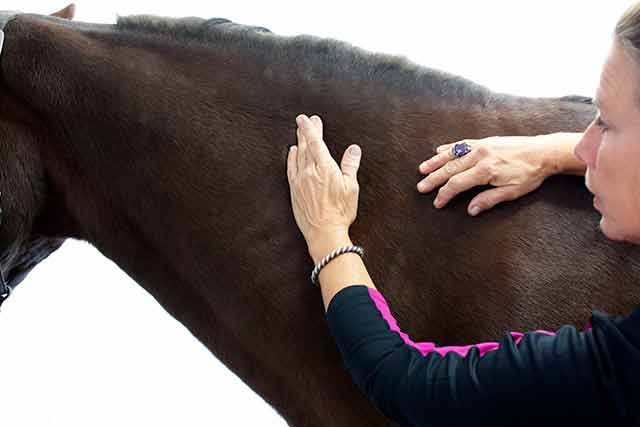 Dawn Cooper show massage technique on an equine